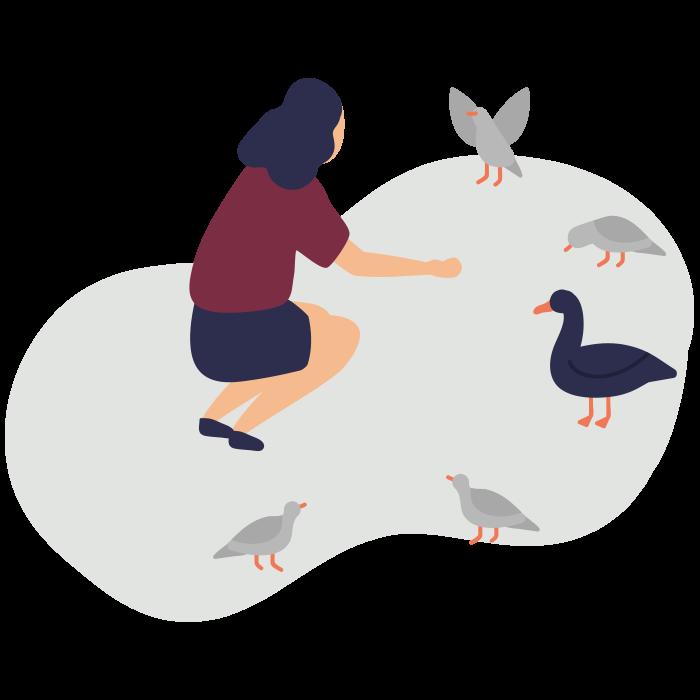 Illustration of woman feeding ducks